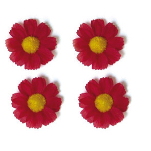 Basil 4 Margrietjes rood
